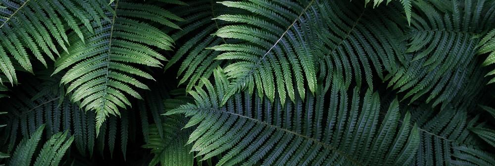 Tapet med löv eller blad