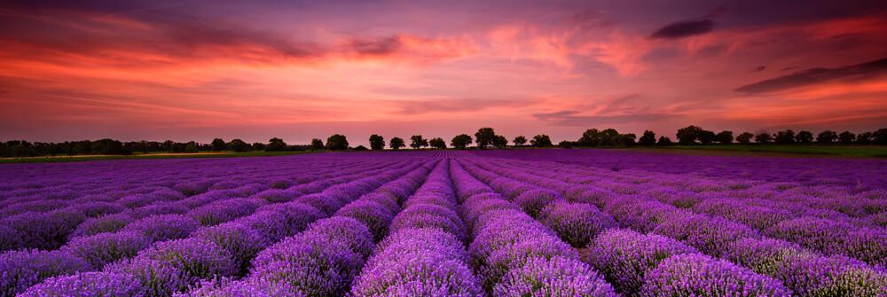 Fototapet med blomfält