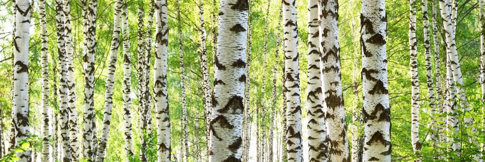 Trädtapet