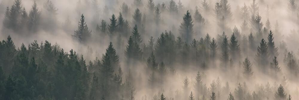 Skogstapet