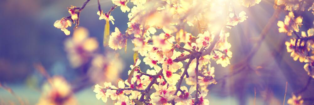 Våren fototapeter