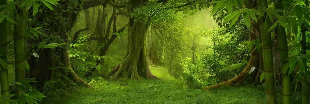 Fototapet med djungelväxter