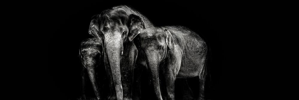 Tapet med elefanter