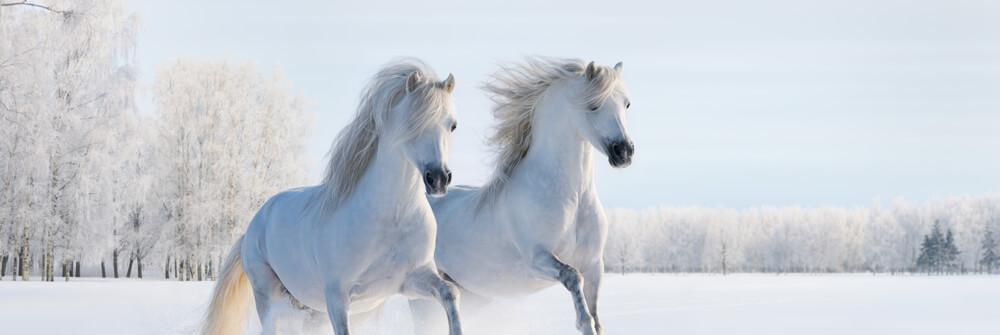 Tapet med hästar