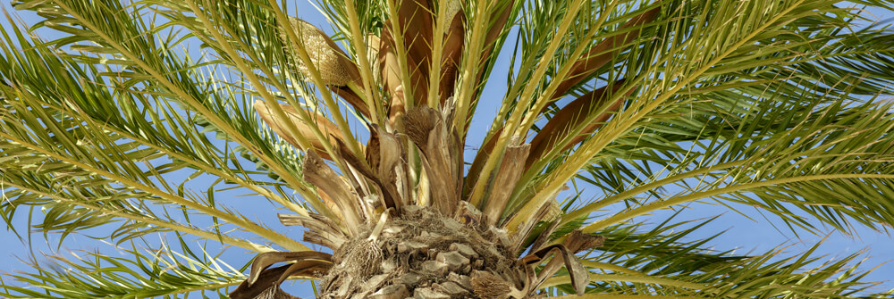 Tapet med palmer