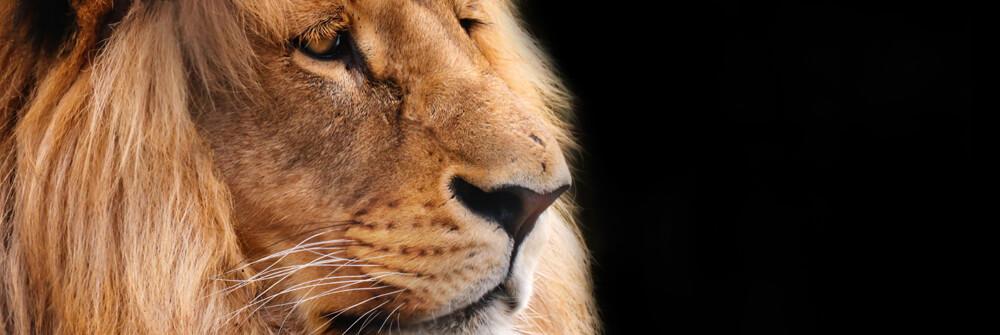Tapet med vilda djur