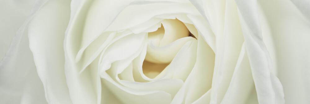Tapet med rosor