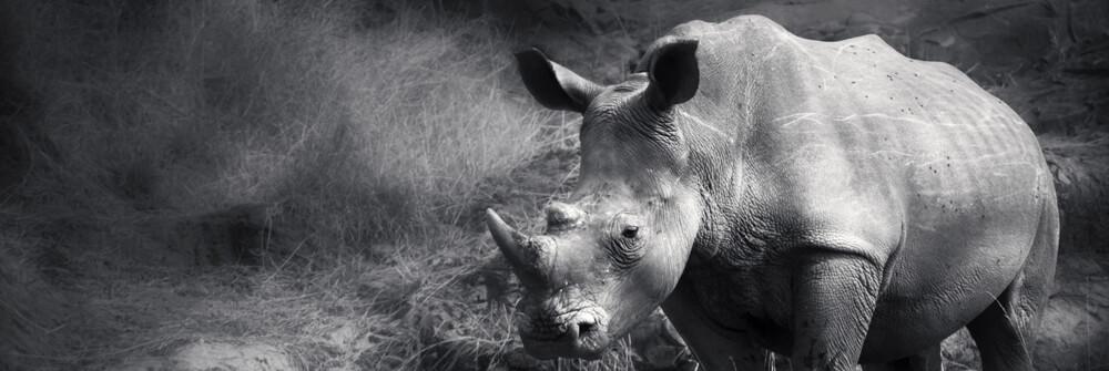 Fototapeter med safaridjur