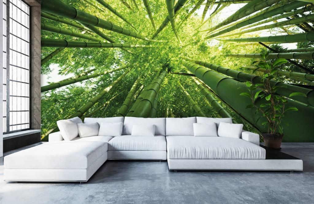 Skog tapet Bambu 1