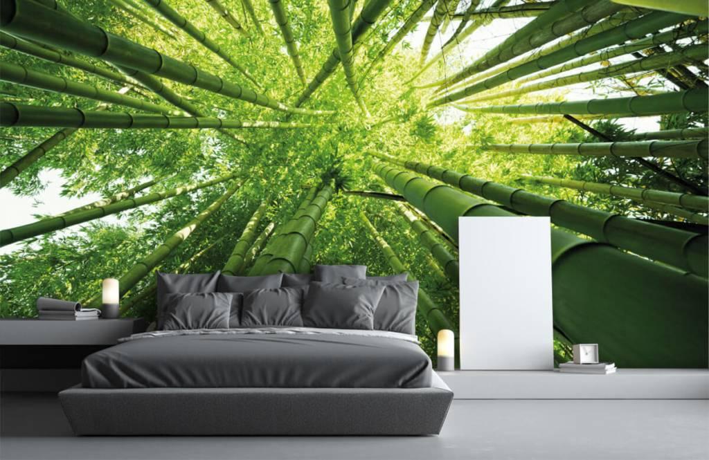 Skog tapet Bambu 3