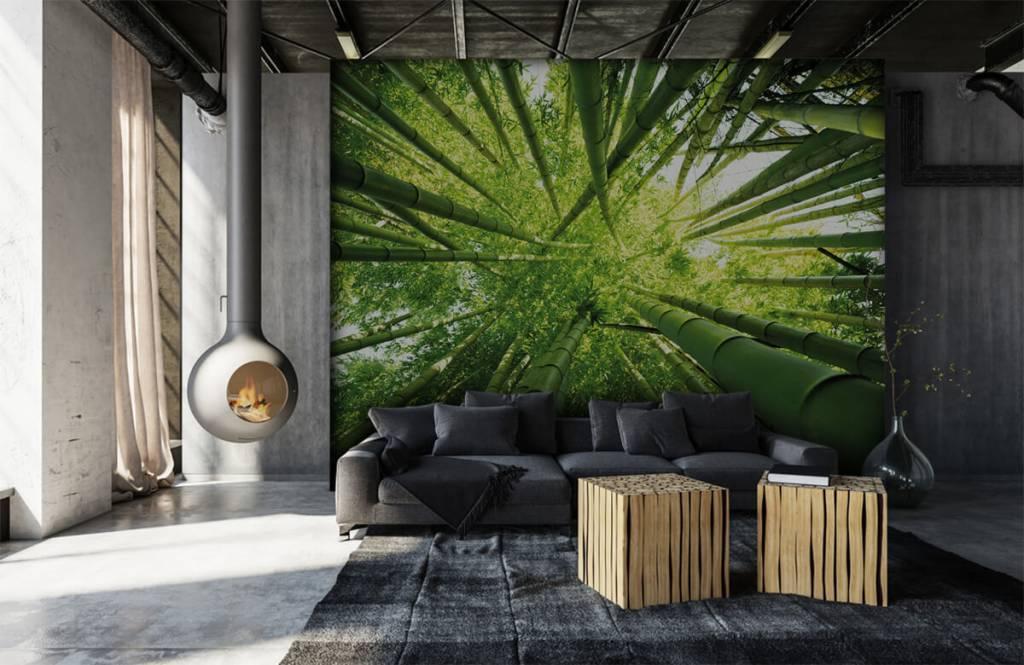 Skog tapet Bambu 6