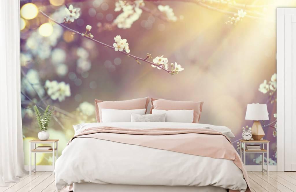 Blossom - Blossom på en gren - Vardagsrum 1