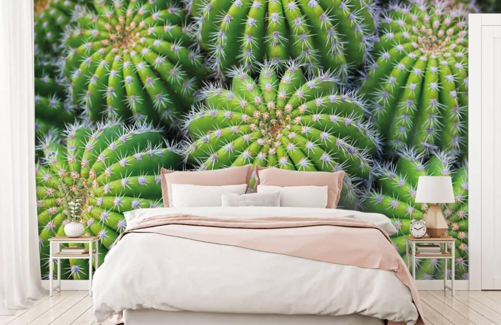 Kaktusar Kaktusar 1