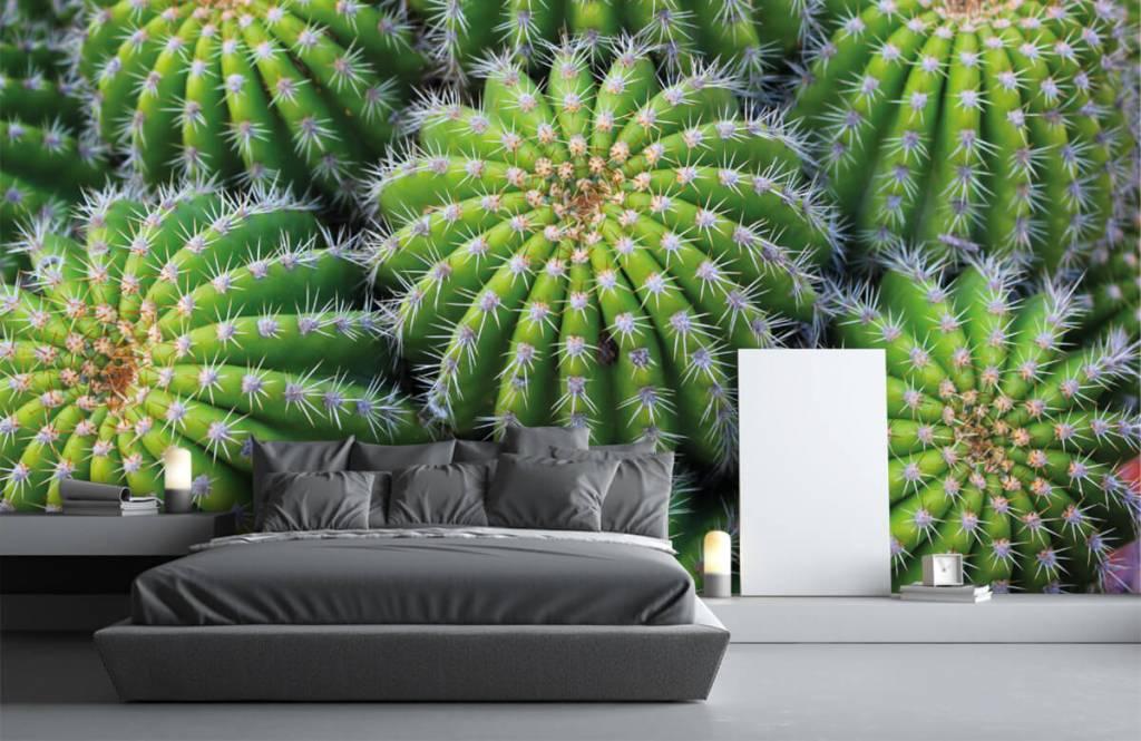 Kaktusar Kaktusar 2