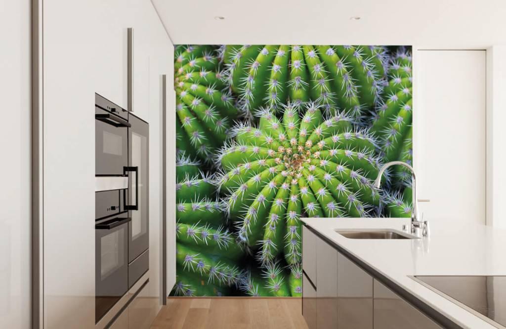 Kaktusar Kaktusar 3