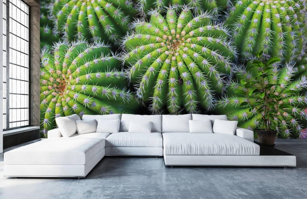 Kaktusar Kaktusar 5