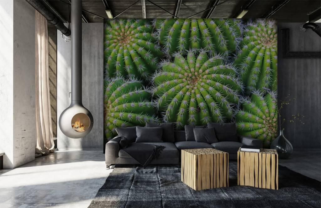 Kaktusar Kaktusar 6
