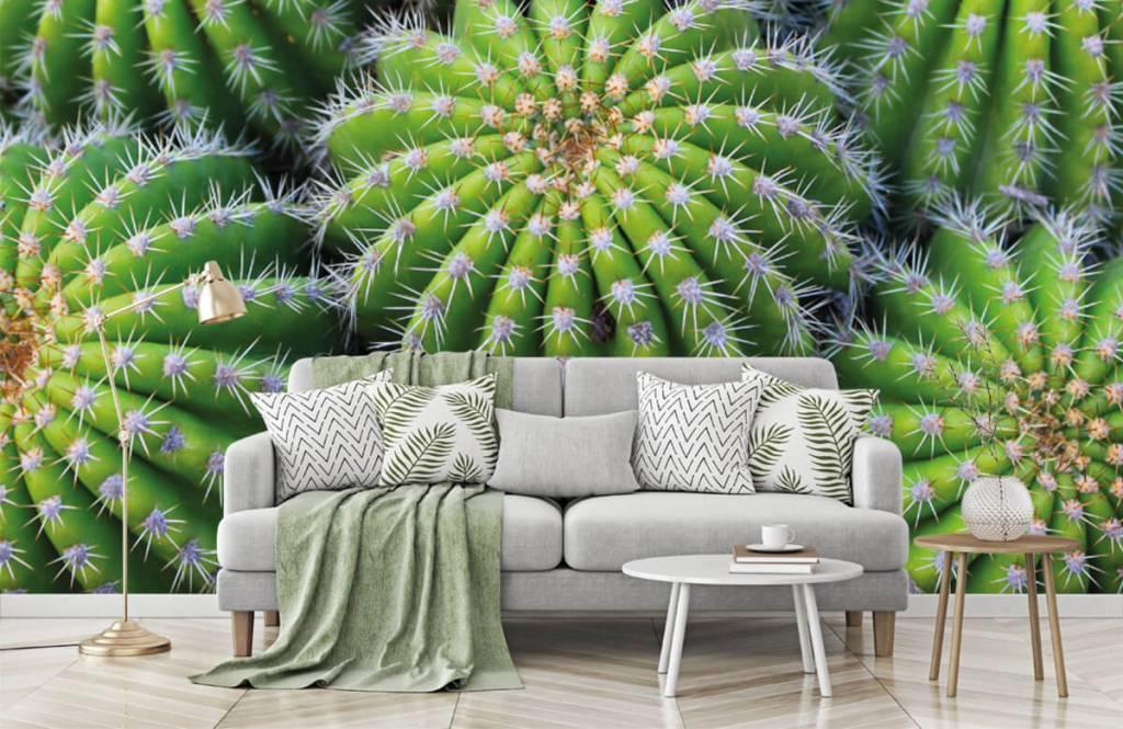 Kaktusar Kaktusar 7