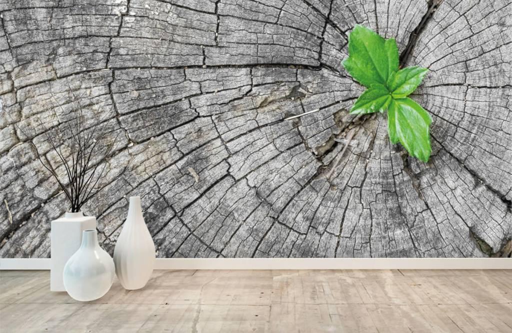 Trä tapeter Diameter på en trädstam 1