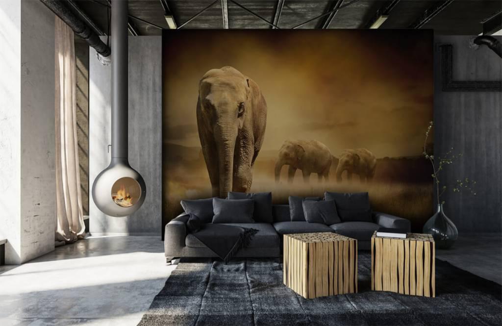 Djur Tre elefanter 1
