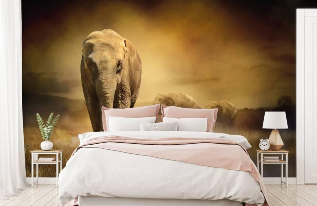 Djur Tre elefanter 2