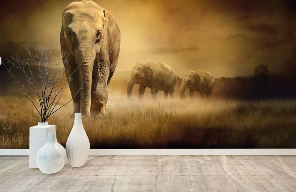 Djur Tre elefanter 3