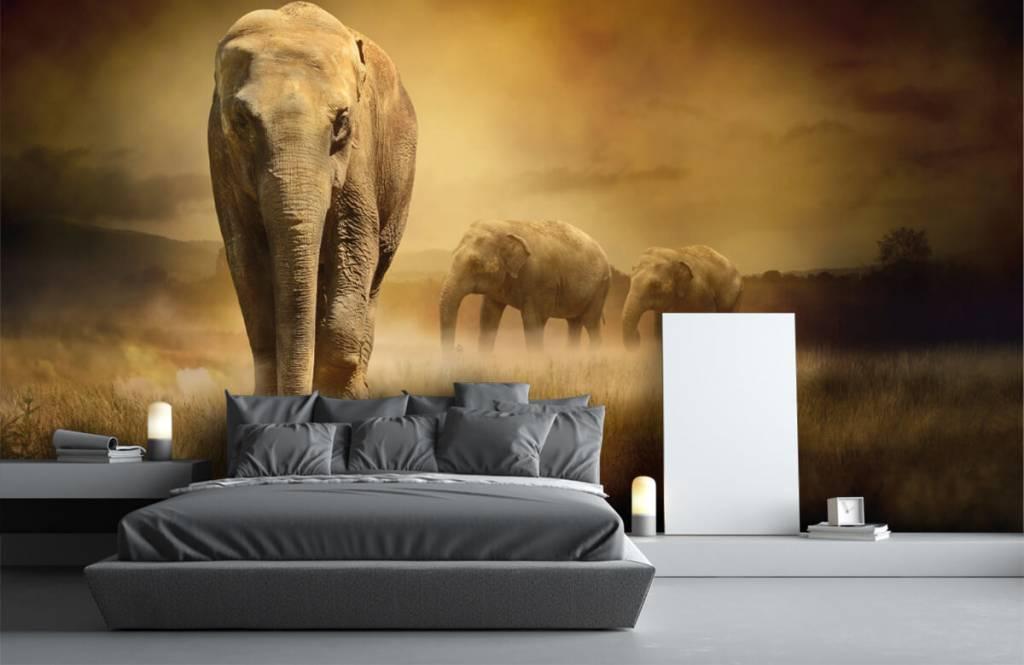 Djur Tre elefanter 4
