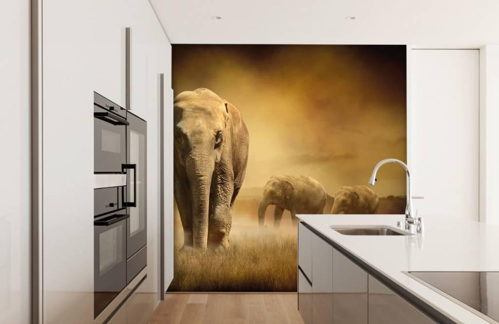 Djur Tre elefanter 5