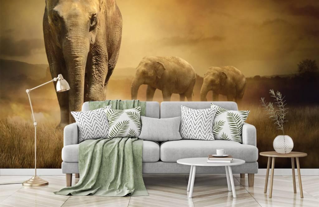 Djur Tre elefanter 8