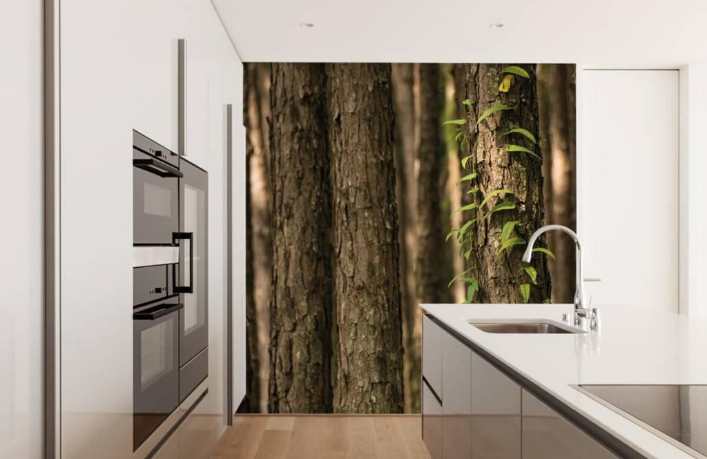 Skog tapet Tunna trädstammar 1