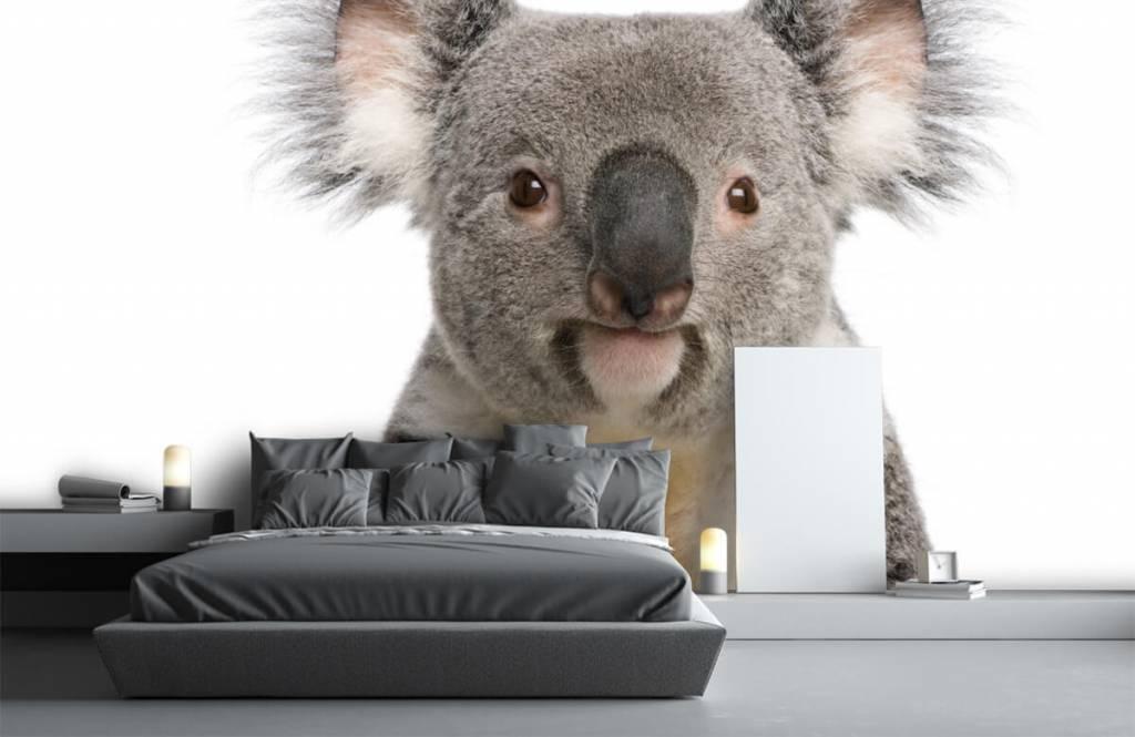 Övriga Foto av en koala 1