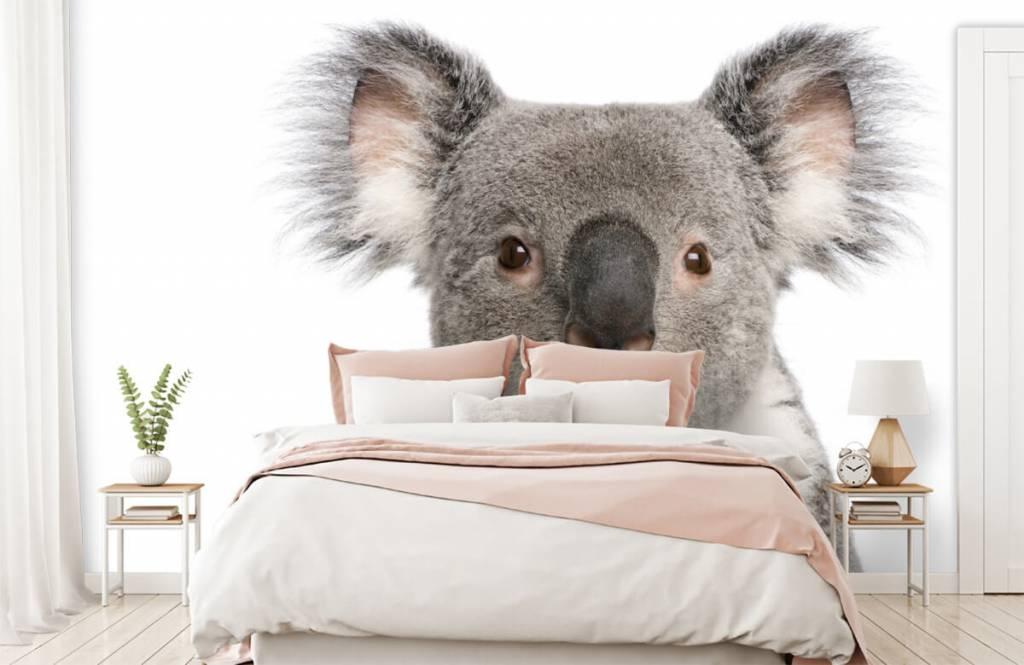 Övriga Foto av en koala 2