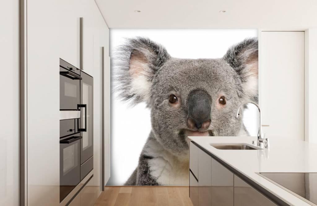 Övriga Foto av en koala 3