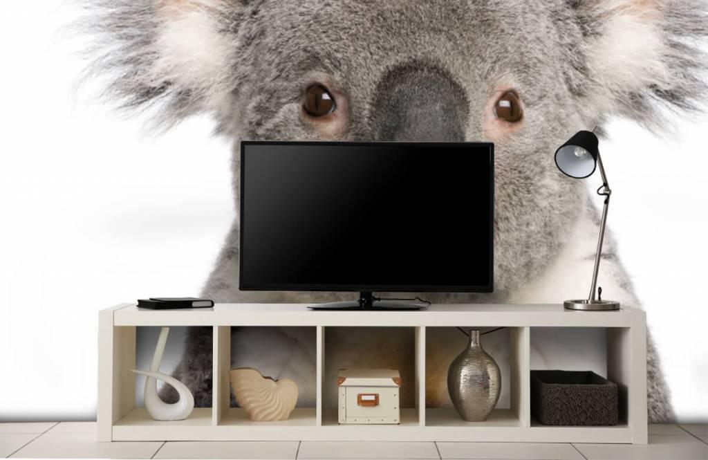 Övriga Foto av en koala 4