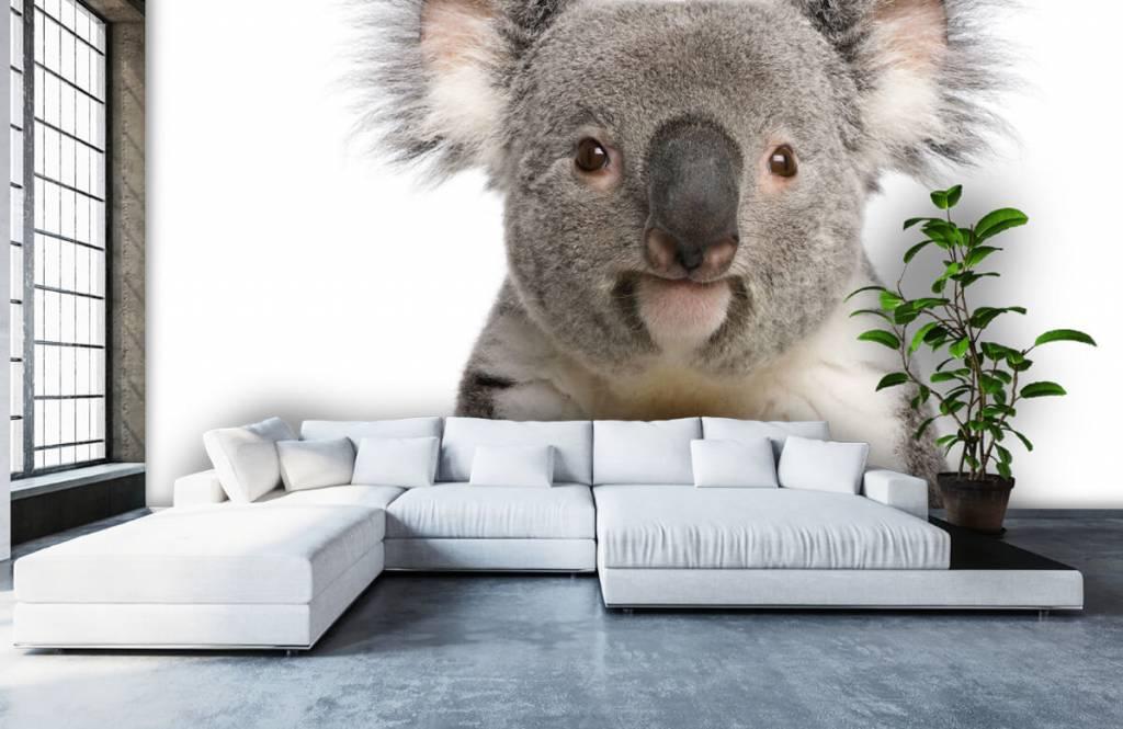 Övriga Foto av en koala 5