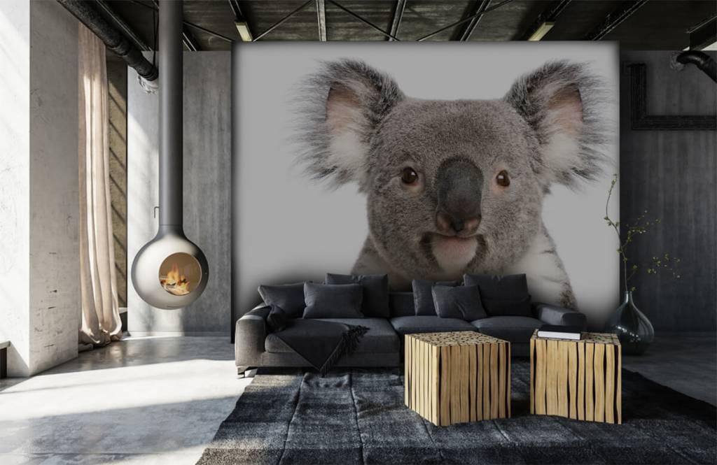 Övriga Foto av en koala 6