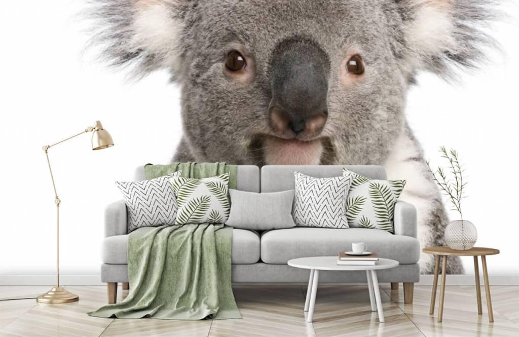 Övriga Foto av en koala 7