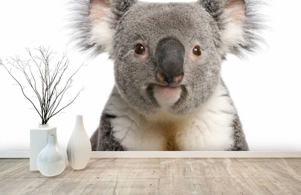 Övriga Foto av en koala 8