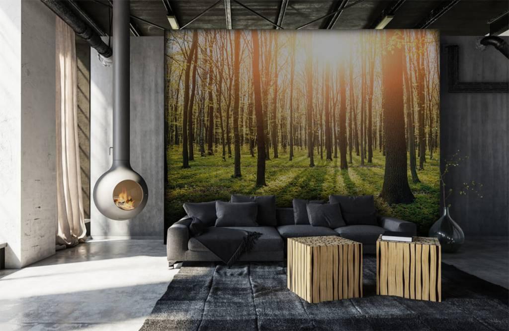 Skog tapet Aftonsol i en skog 6