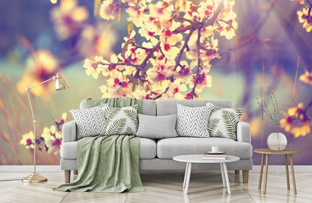 Blossom blommande träd 1