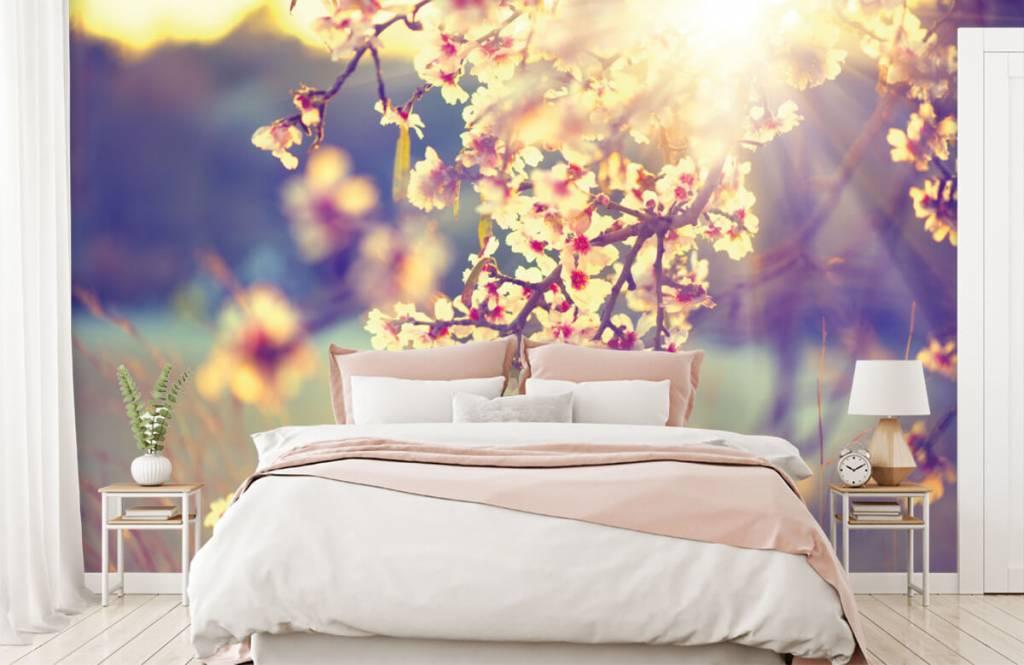 Blossom blommande träd 2