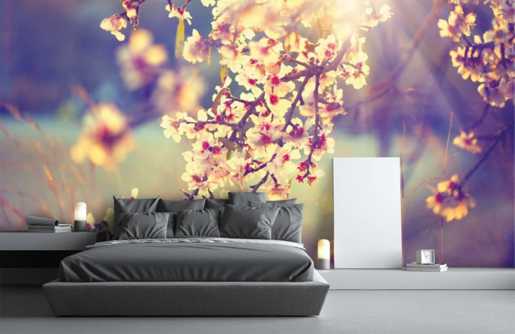 Blossom blommande träd 3