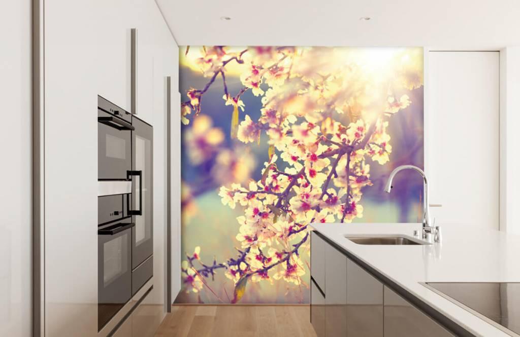 Blossom blommande träd 4