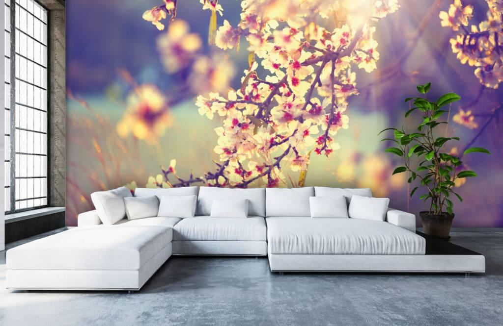 Blossom blommande träd 6