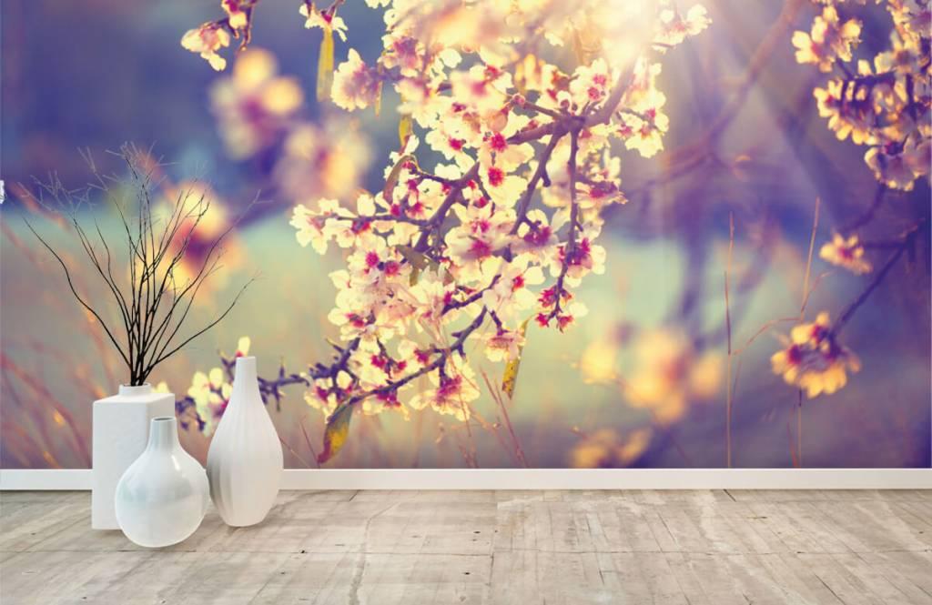 Blossom blommande träd 8