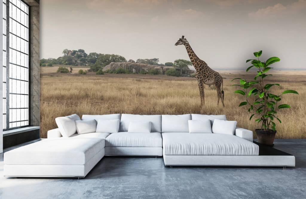 Djur Giraff på en savann 1