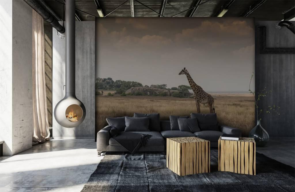 Djur Giraff på en savann 2