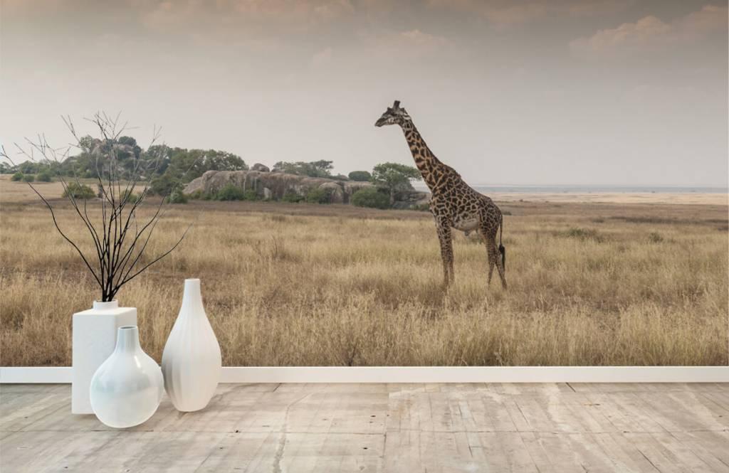 Djur Giraff på en savann 4