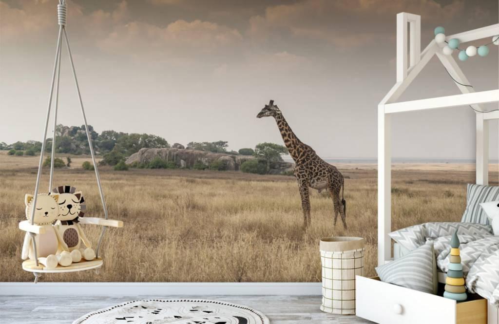 Djur Giraff på en savann 5