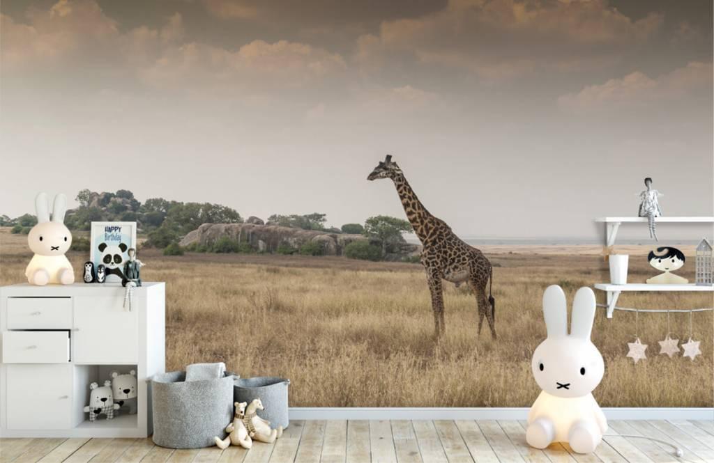 Djur Giraff på en savann 6